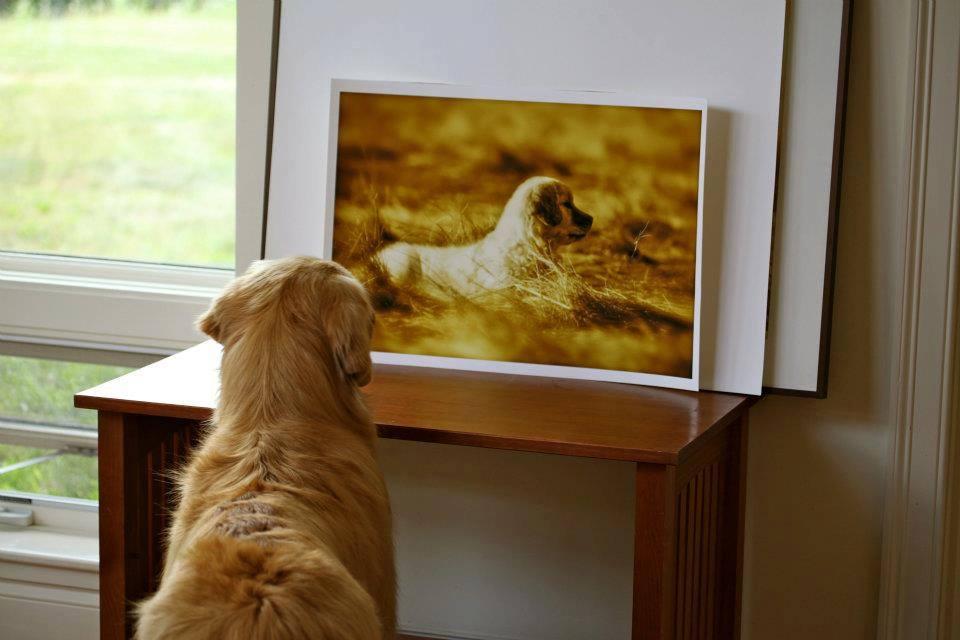 dogandphoto