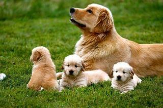 puppiesmom