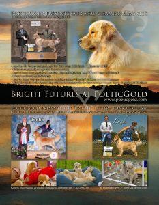 Bright ad draft 3
